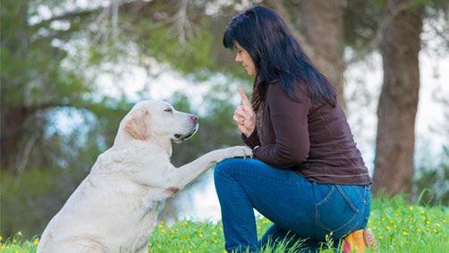 chien obéissant