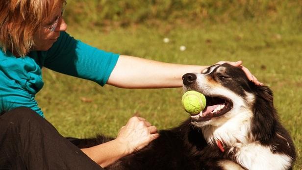 chien qui joue