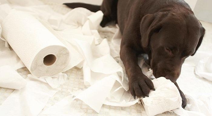 propreté chien